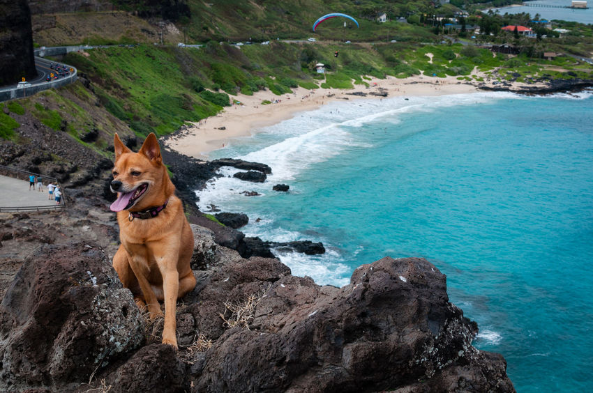 Beach Beachphotography Dog Dogslife Geology Makapu'u Ocean Paragliding