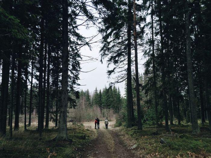 Forrest Swedish