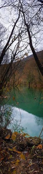 Water Tree Lake Reflection Sky Landscape Close-up