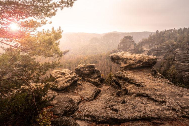 Saxonswitzerland Valley Beauty In Nature Tranquility Summertime Forrest Tranquil Scene Mountain View Golden Hour Sunset Light Tree Sunlight Sky Foggy Fog Sunrise - Dawn Dawn Atmospheric Mood Morning Sunrise