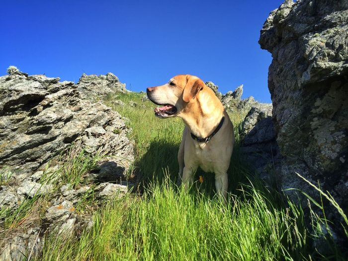 Be like Elwood; live in the now and appreciate every moment. Check This Out Hello World Hiking Dog Dogs Dogslife Dog Love Dog❤ Animal Pets Walking The Dog Dog In Natural Environment Dog In Nature Squirrel! What's That? Hike Hikingadventures Hiking Adventures Nature Photography Nature Hike Labrador Yellow Lab Be Like A Dog Happy Dog Happy Dogs