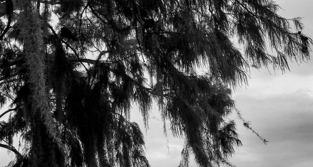 Tree Blackandwhite Blackandwhite Photography Childhood Day Park Play Water