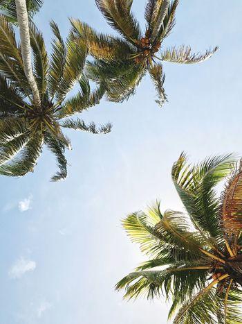 The Week On EyeEm Palm Tree Same Sky Where Am I? Heaven? Guess