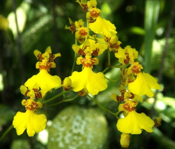 EyeEm Best Shots - Flowers Flower Of The Day  Flowers Flor Meu Jardim Peruíbe SP Brasil Lemon By Motorola