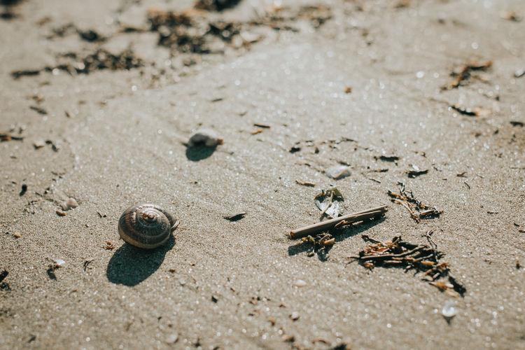 Sea Shells 🐚