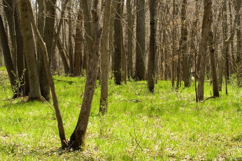 Shoot, Share, Learn - Mitchell County EyeEm Meetup Tree Porn Tree Landscape