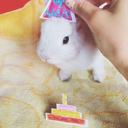 Umnuayy the rabbittooo