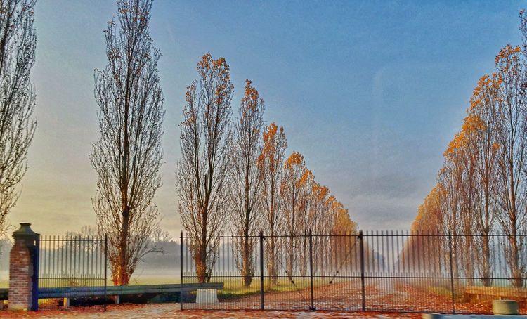 Autumn Autumn Colors Autumn Leaves Fog Morning Road Roadclosed