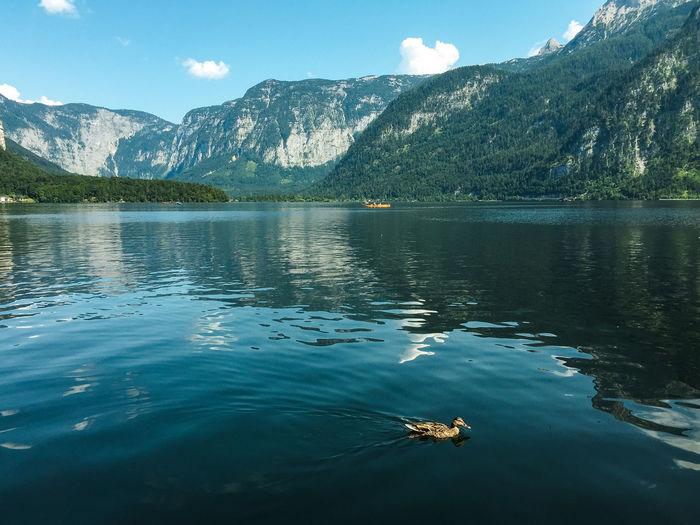Duck swimming in lake against mountain range