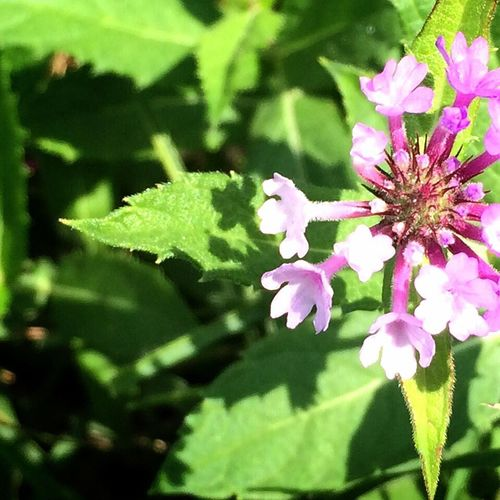 Sweet Album Flowerdiary 花占い Tadaa Community