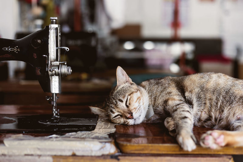 Close-up of a cat resting on table