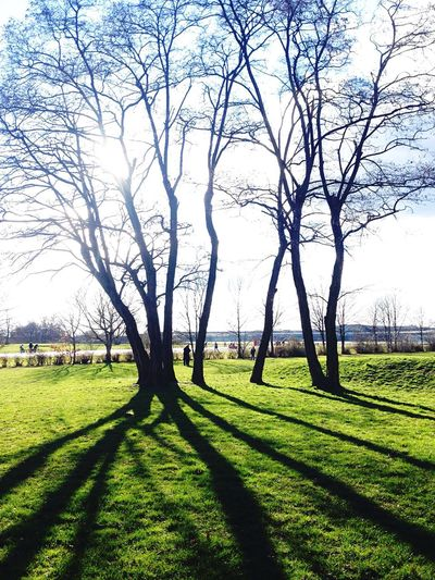 Living Bold Silhouette Trees Light And Shadow South Secret Garden The Great Outdoors - 2015 EyeEm Awards