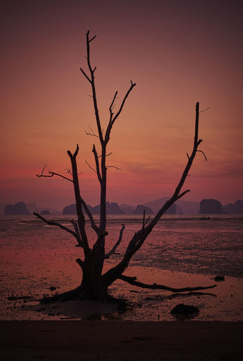 Silhouette bare tree on beach against sky during sunset