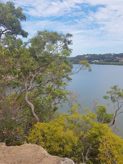 Georges River, Oatley Sydney Australia Landscape Oatley Sydney, Australia Sydney Bush Bushland River View Tree Sea Day Beauty In Nature