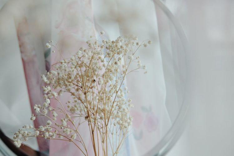 Mirror Mirror Reflection Tree Close-up Blooming Flower Head Petal Single Flower Growing Fragility In Bloom