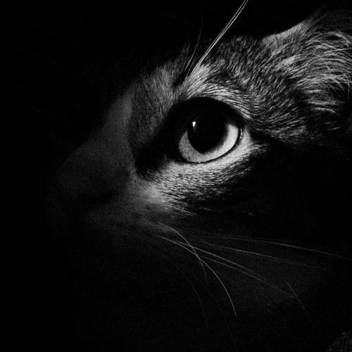 Lovemycat Catsoneyeem Cat Catlovers Cat♡ Cats Of EyeEm Catsoftheworld Perros&gatos Domestic Animals Domestic Cat Pets Gatos En La Ventana Gatos Indoors  Feline Indoors  Caturday Cat Photography Catoftheday Gatto Katzen Katzenliebe Nature One Animal Animal Themes