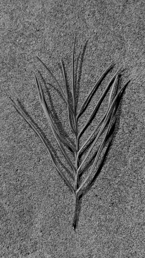High angle view of feather on plant