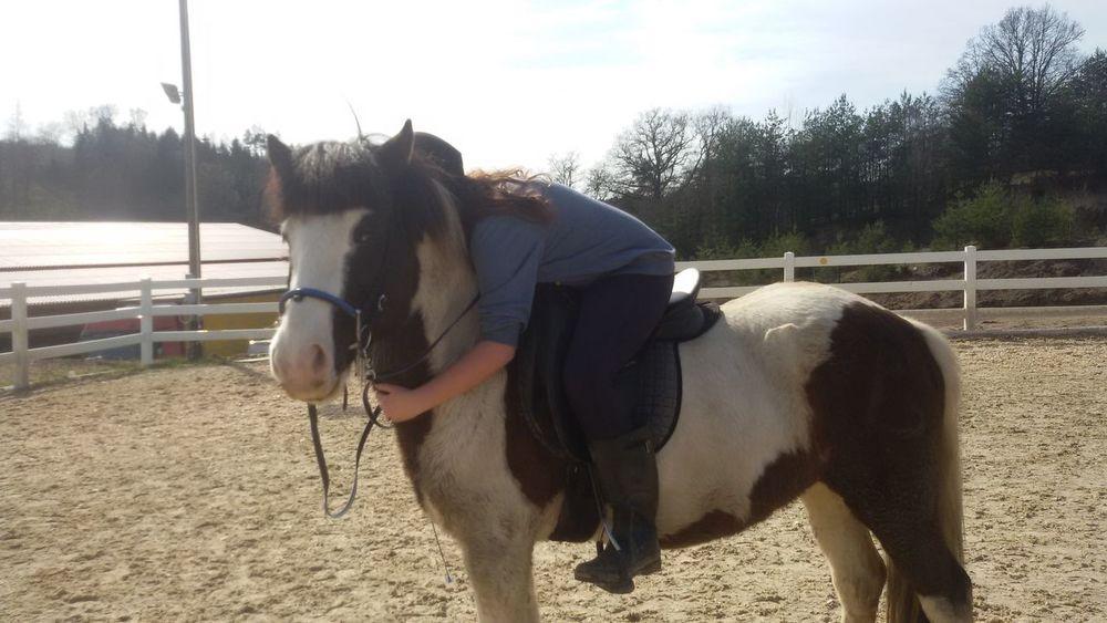 Islandpferd  Love ♥ Love Is In The Air Horse Horserider Pony❤️