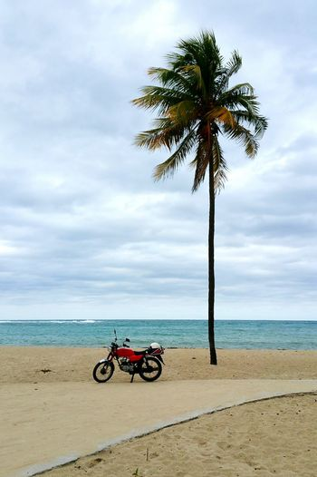 Motorcycle Parked By Palm Tree On Beach