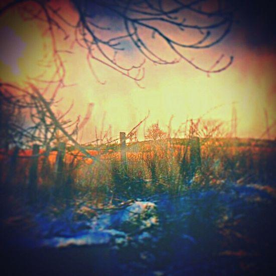 Kas© Messedupjournal Aberdeenshire Countryside Scotland Trees Skies Fence Grass Bush