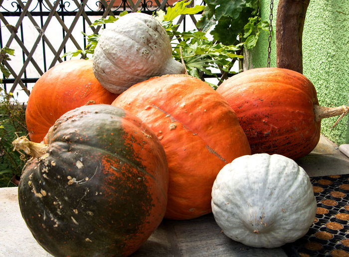 Autumn time is pumpkin time Autumn colors Big And Fat Close-up Day Differnt Pumpkins Focus On Foreground Food Freshness Front Door Fruit Group Of Objects Healthy Eating Nature No People Orange Color Outdoors Pumbkin Pumpkin Pumpkin Harvest Raw Food Ripe Still Life Sunlight Vegetable Wellbeing