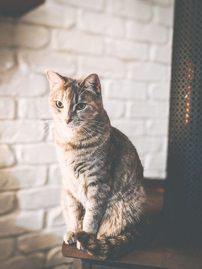 Cat sitting on a fireplace