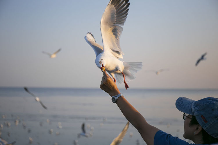 Animal Themes Animal Wildlife Animals In The Wild Beach Beauty In Nature Bird Clear Sky Day Flying Focus On Foreground Human Hand Leisure Activity Lifestyles Mid-air Nature One Animal One Person Outdoors Real People Sea Sea Bird Seagull Sky Spread Wings Water Fresh On Market 2018