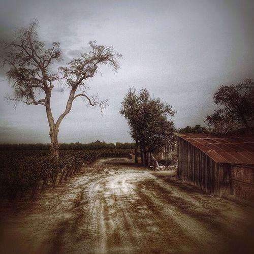 Landscape_Collection Country Tadaa Community Rural Scenes California Love Visalia Enjoying Life