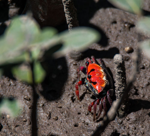 Animal Markings Beauty In Nature Close-up Crab Day Focus On Foreground Ground Growth Mangrove Crab Mangrove Forest Mangrove Life Natural Pattern Nature No People Orange Color Outdoors Plant Small Crab Tranquility