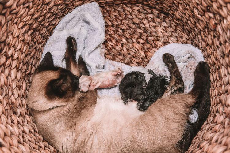 High angle view of dogs sleeping