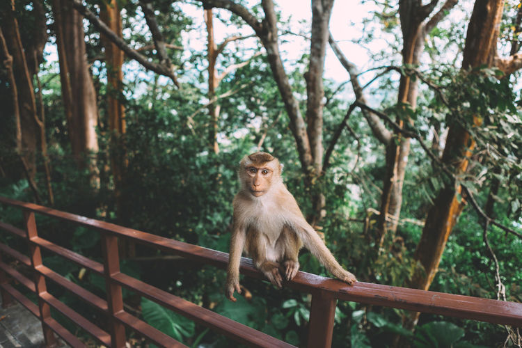 Monkey on railing against trees in forest