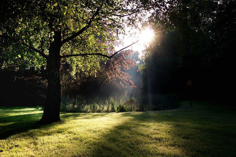 Trees on field in park
