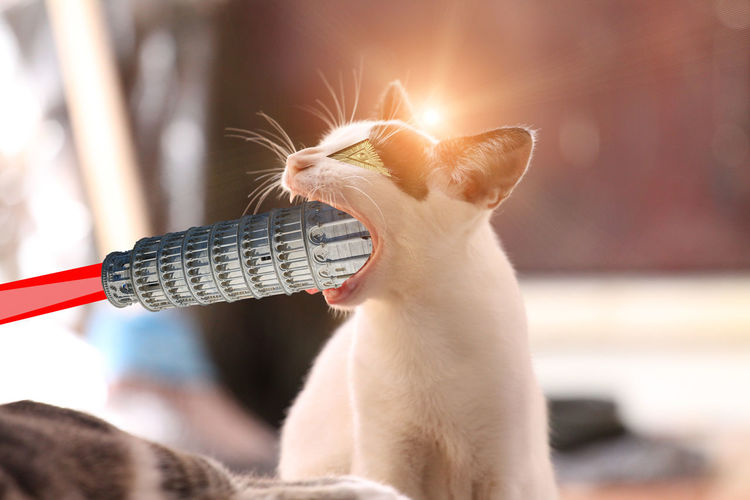 Cat Chat Cute Pets Illuminati Light Saber Pisa Tower Tour De Pise WTF