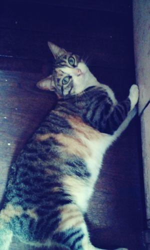 Cat♡ Beautiful ♥ Happy Cat :) Cat Lovers 🐱💞