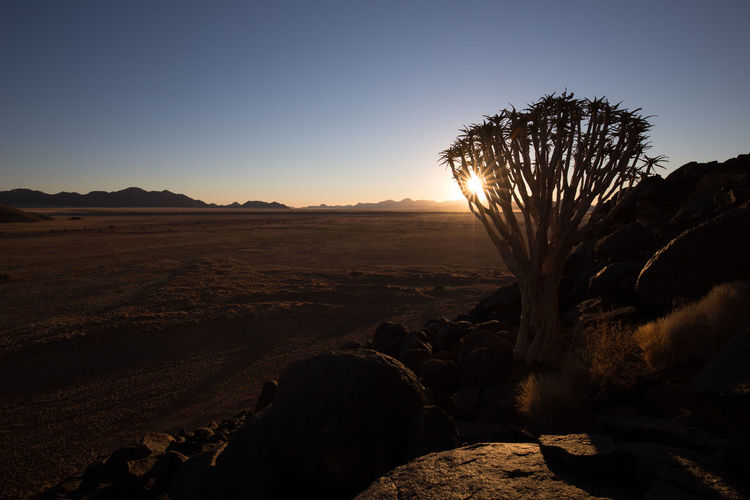 Arid Climate Beauty In Nature Clear Sky Environment Land Landscape Lens Flare Nature No People Non-urban Scene Outdoors Plant Rock Rock - Object Scenics - Nature Silhouette Sky Solid Sun Sunlight Sunset Tranquil Scene Tranquility