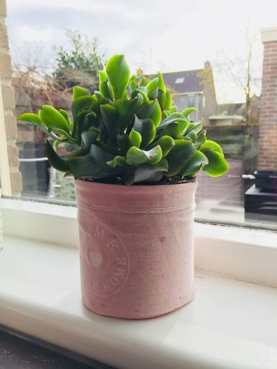 Pink Plant Flower Potted Plant Green Greenplants Beautiful