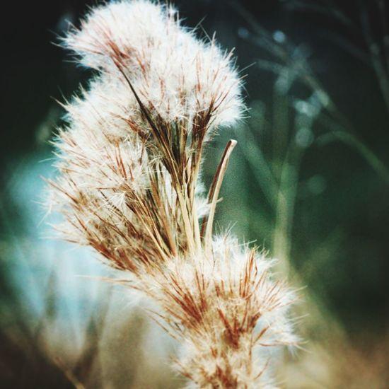 Lovely Plant...