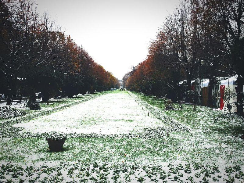 Sky Tree Outdoors Nature Day No People Sony Rx100m2 EyeEmNewHere Urban Skyline Snow Freshness Bucharest