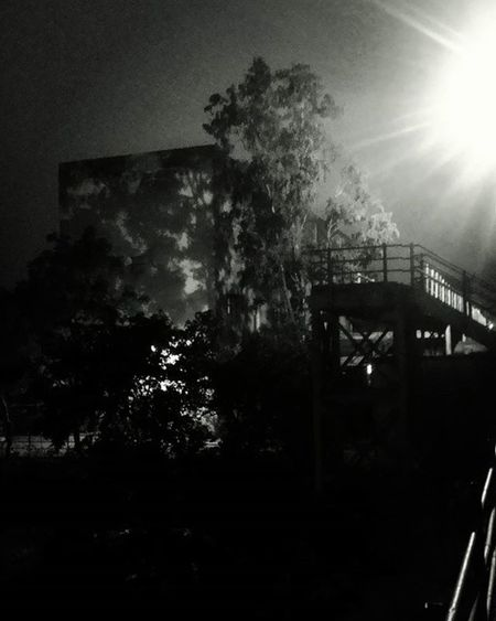 Night Light Trees Shadow Black White Vashi Navimumbai