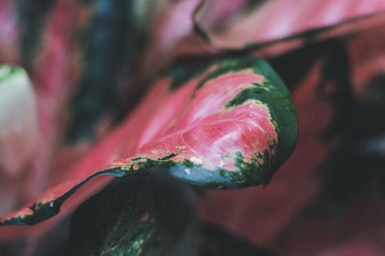 Close-up of wet flower