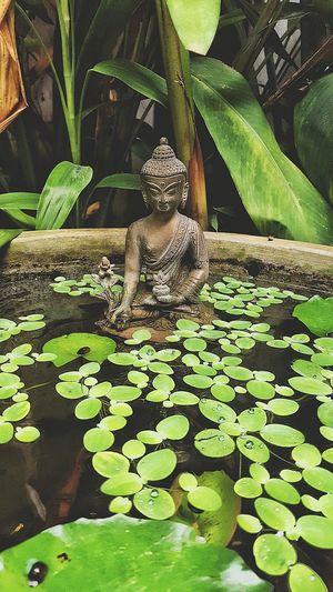 PEACE Budha