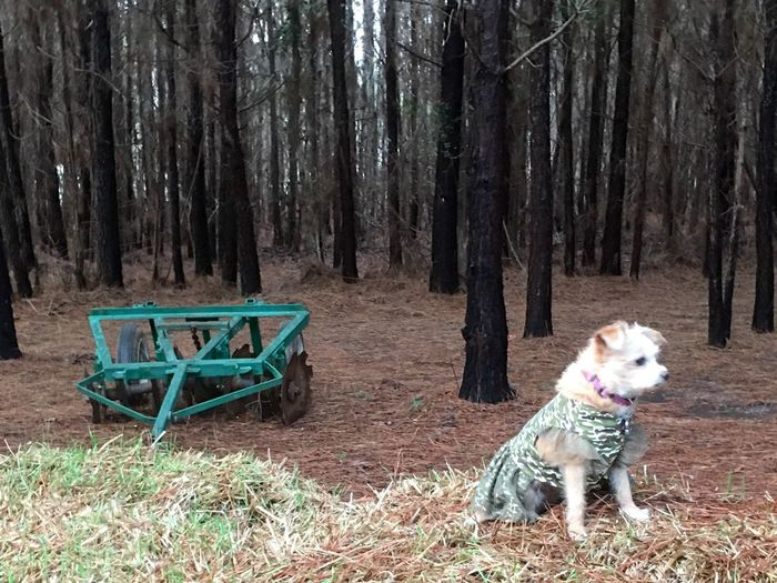 Dog on tree trunk in forest