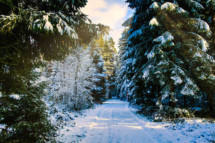 Snow covered road amidst trees against sky during winter