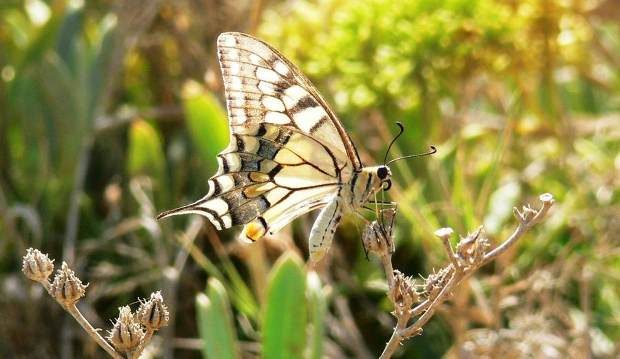Butterfly from
