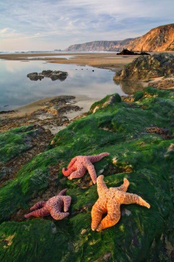 View of lizard on beach