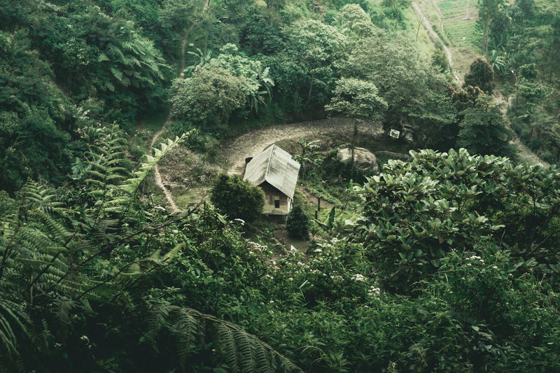Aerial View Plant Tree Growth Nature Green Color Built Structure No People Forest Day Land High Angle View Tranquility Outdoors Beauty In Nature Rainforest My Best Photo Still Life