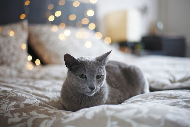 Cat lying on bed at home