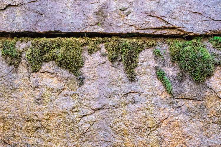 Moss and Rock Minimalism Fault Line Growth Backgrounds Built Structure Close-up Day Eroded Full Frame Growth Moss Nature No People Outdoors Plant Rock Rock - Object Rock Formation Rough Solid Stone Wall Textured  Tree Wall Wall - Building Feature