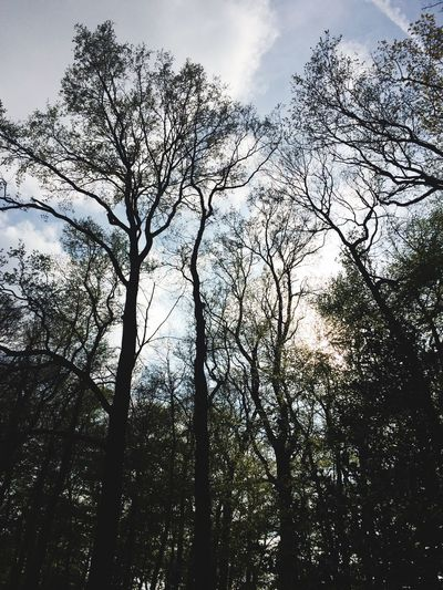 Tree Low Angle View Nature Sky Forest Outdoors No People Beauty In Nature IPhoneography