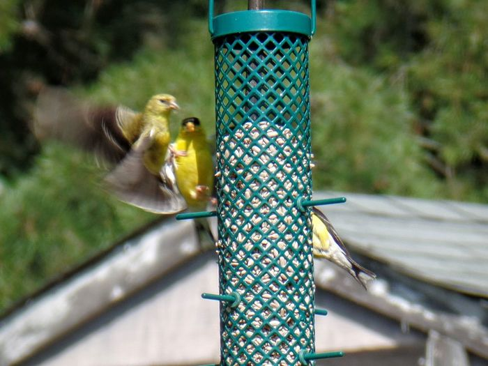 Close-up of bird perching on feeder